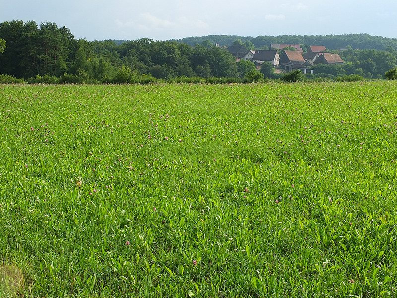field with village