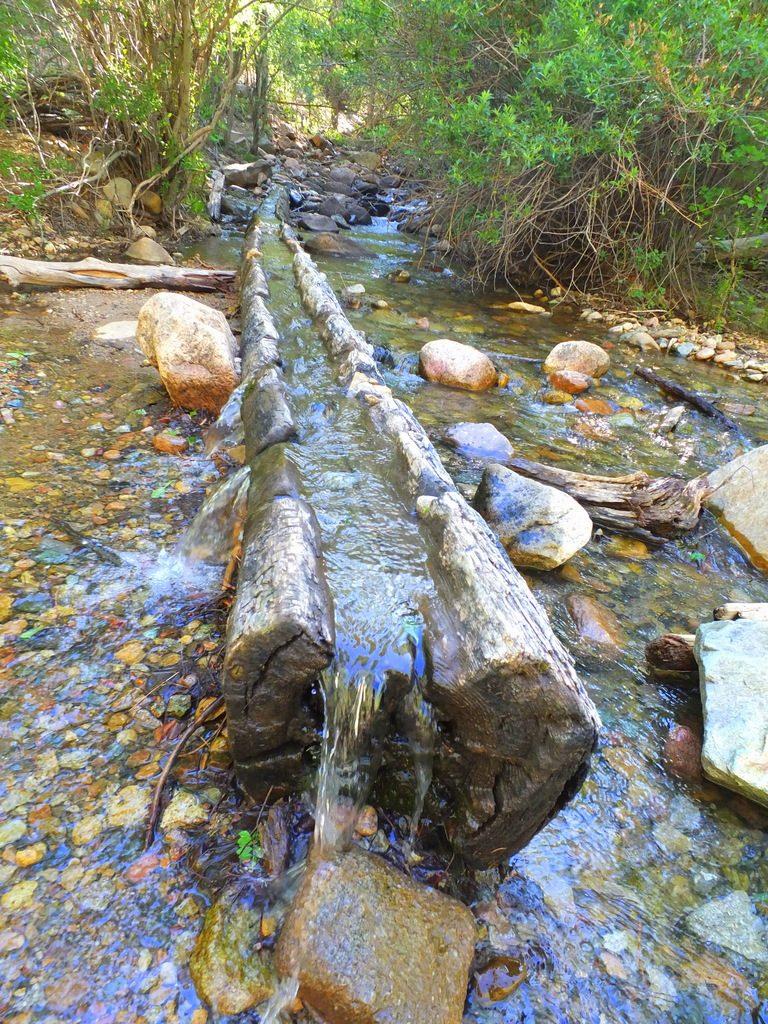 interesting log at the trailhead