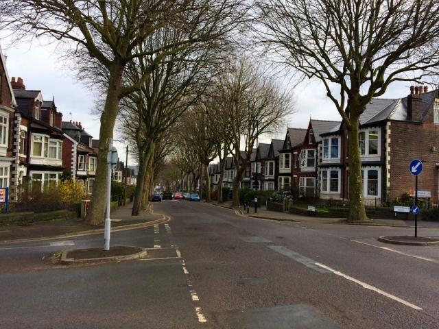 Sheffield - Street Trees