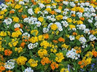 great flower displays in Huddersfield