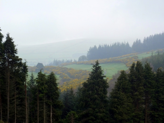 Climb into the mist