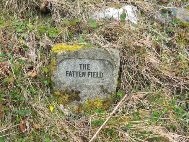 The Fatten Field