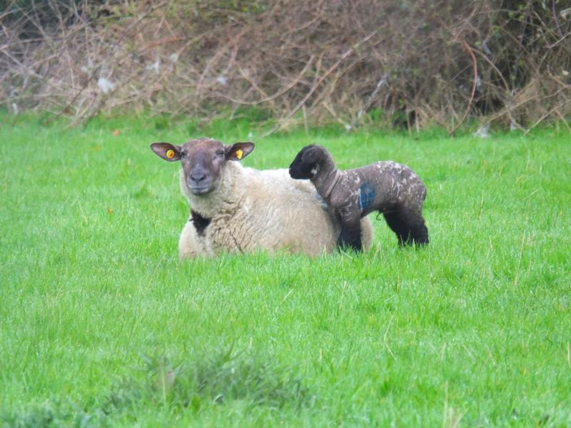 in the Fatten Field