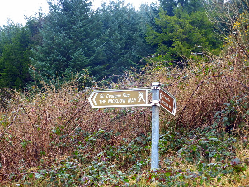 The way to the Wicklow Way is well marked ... in places
