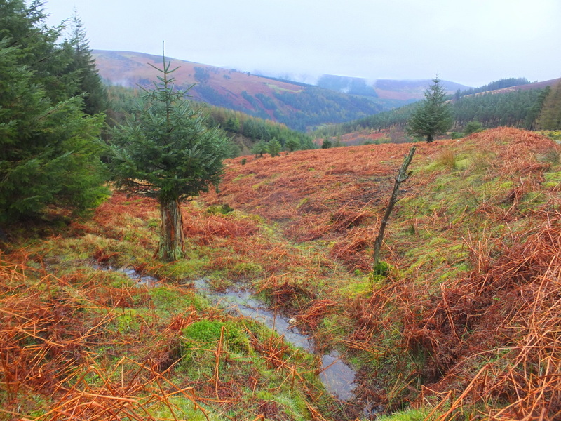 View across the heath