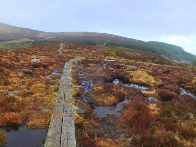 high bog