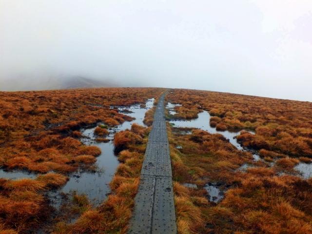 high bog in the fog