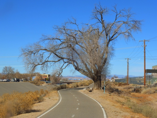 rare shade along the North Diversion Channel Trail
