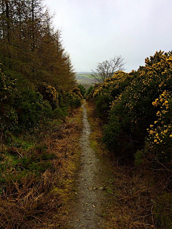 bushy pathway