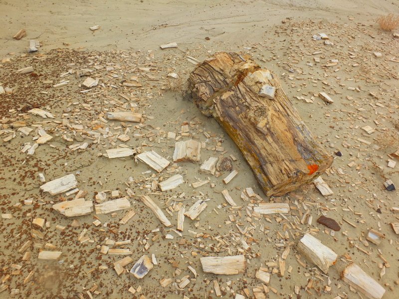 petrified wood is found throughout the area
