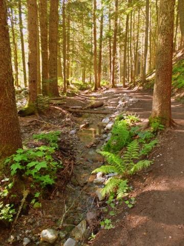ferns on the trail