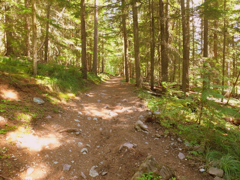 trail into the forest