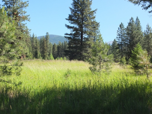 grassy gulch