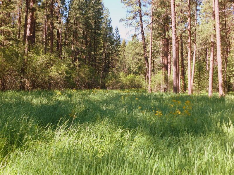 healthy meadow