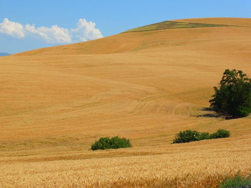 steep field