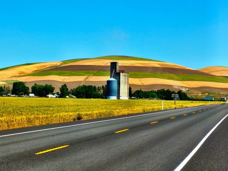 neopolitan hill