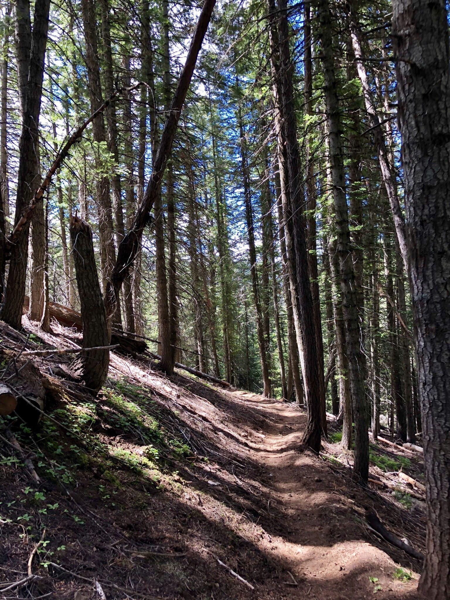 Panjab Trail