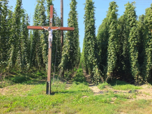 shrine and hops