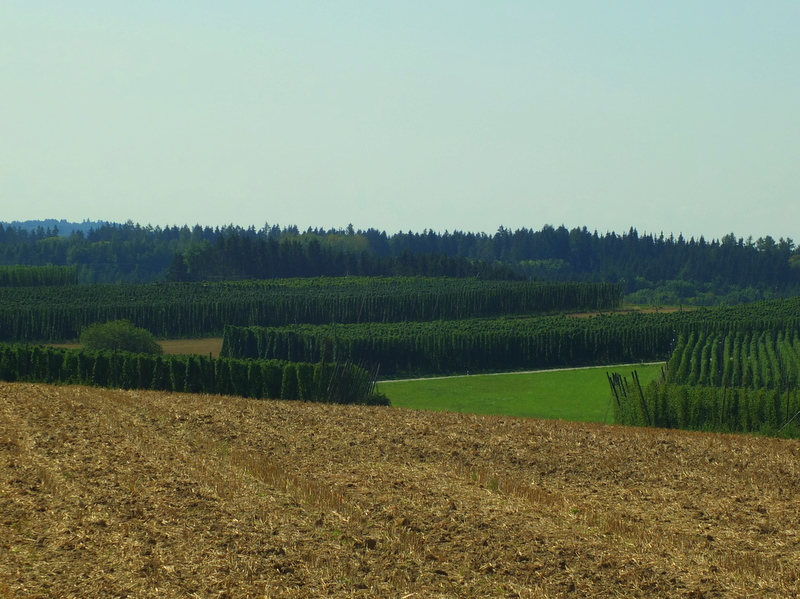 hops fields