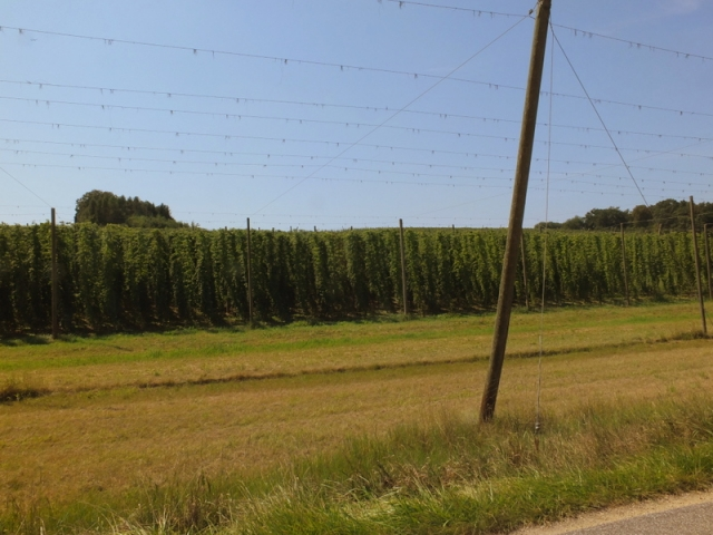 unused hops structures in foreground