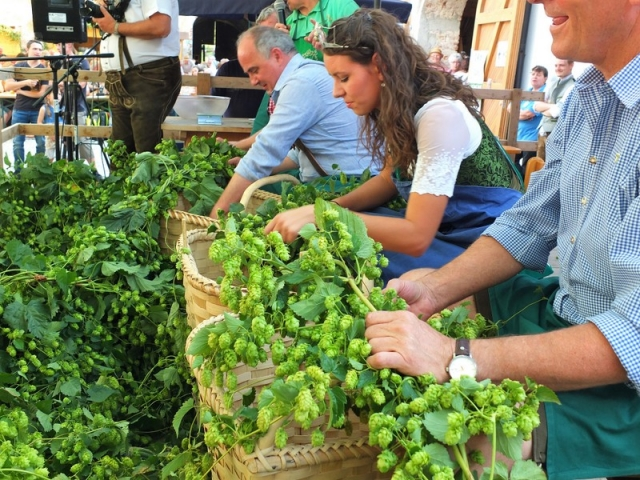 local dignitaries and the Hopfen Königin in a hops shuck-off