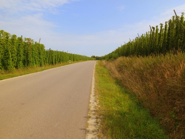 hops fields line many roads
