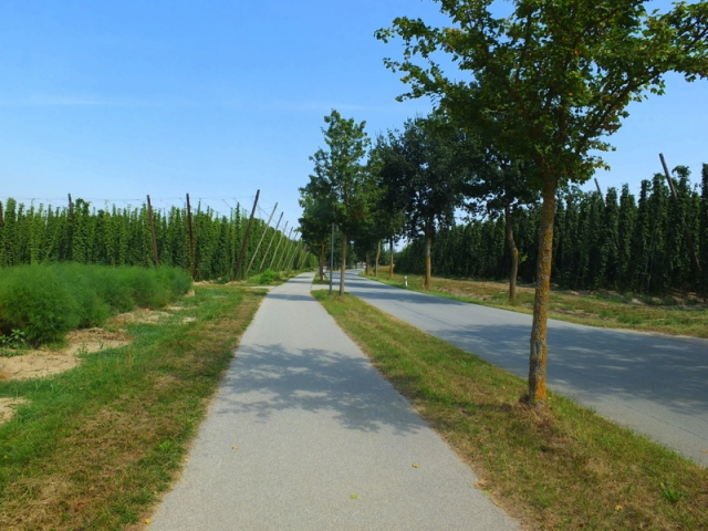 bikeway through the hops fields