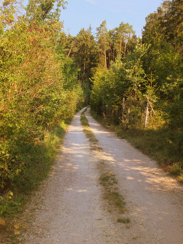 Hallertau countryside