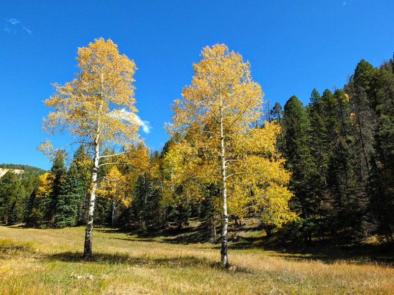 Mallette Canyon hike - Carson National Forest