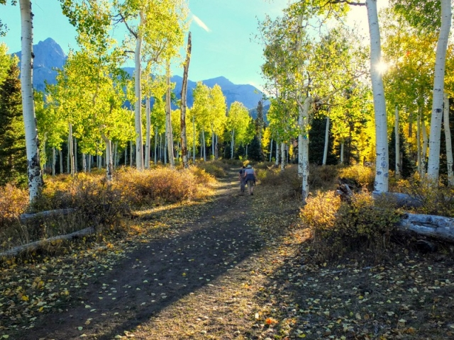 on the Dallas Trail in the Uncompahgre National Forest