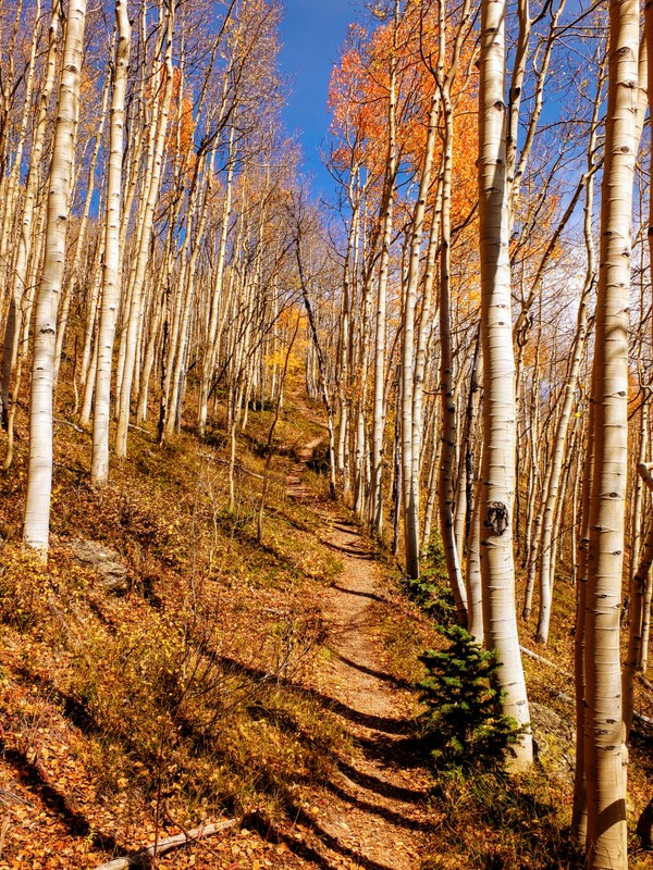 Full Moon/Richmond Loop Trail in the San Juan National Forest