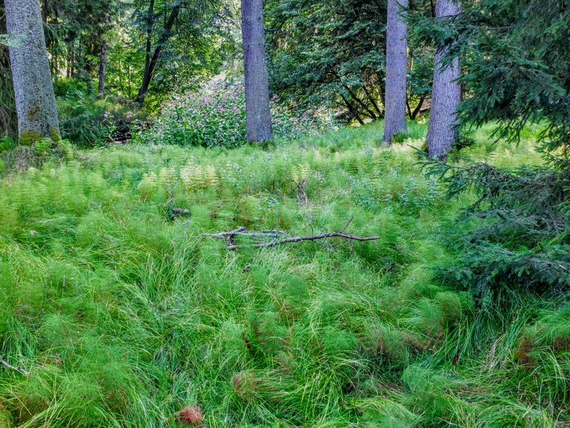 grassy riverside