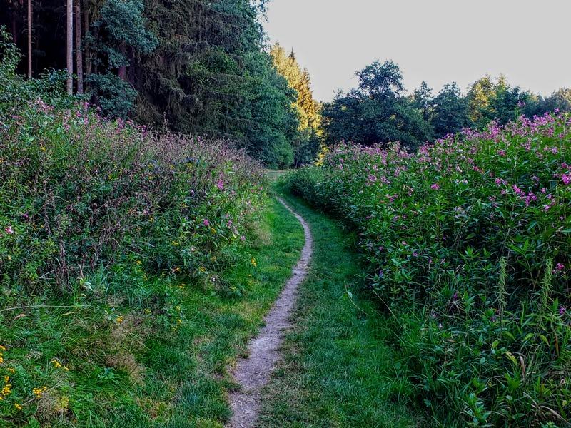 on the Goldsteig in the Waldnaabtal