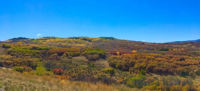 San Juans hillside