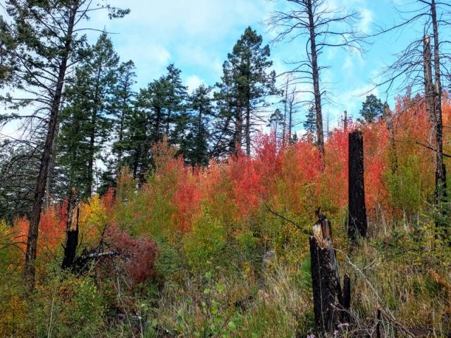 Canada Bonita trail - Santa Fe National Forest