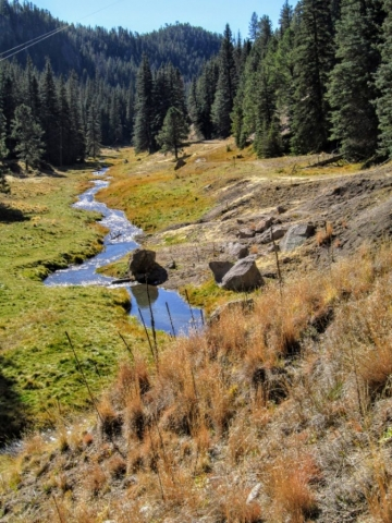 squiggle in the creek