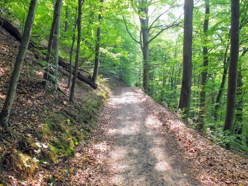 forested pathway