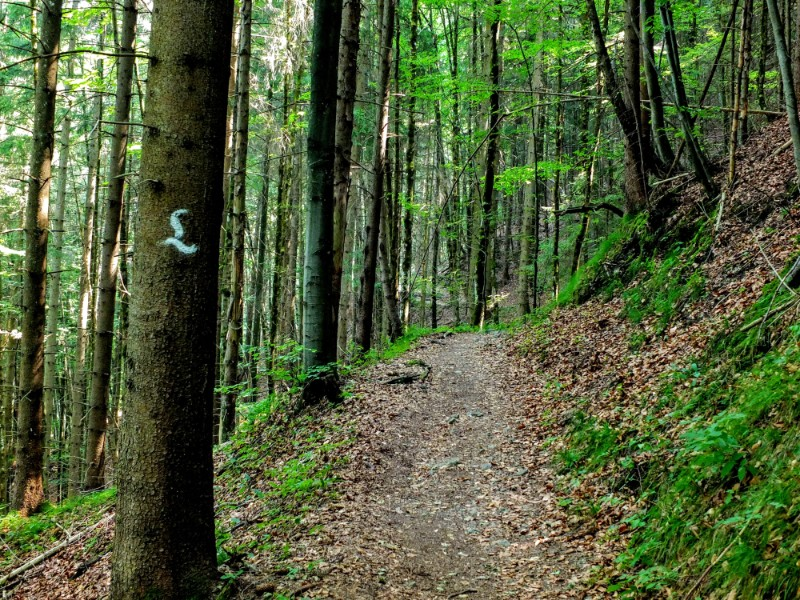 forest trail - Ludwigsweg marker on tree