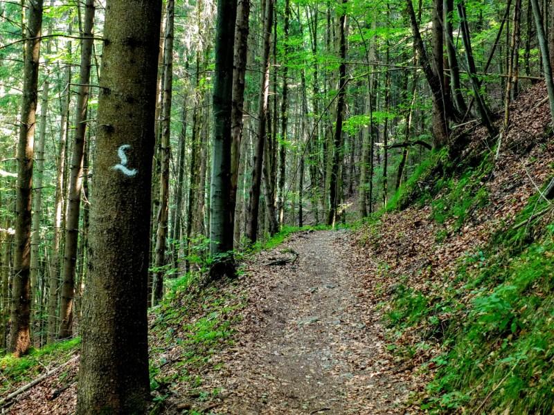 forest trail - Ludwigsweg marker on tree