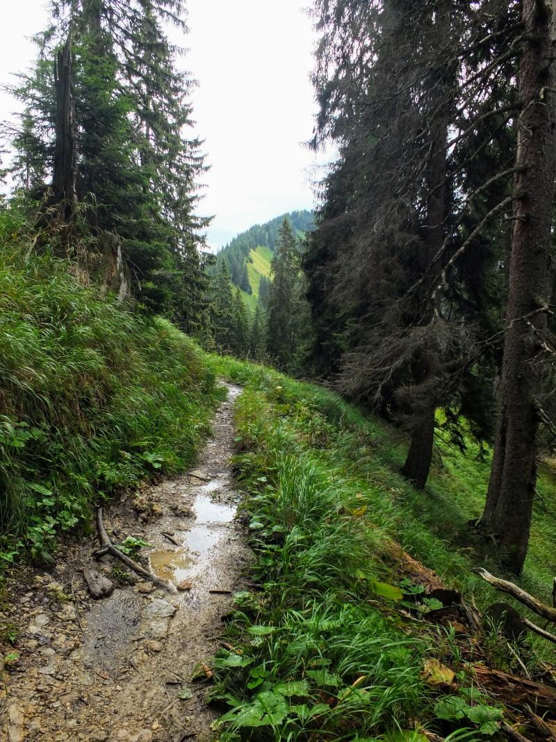 trail after a rain