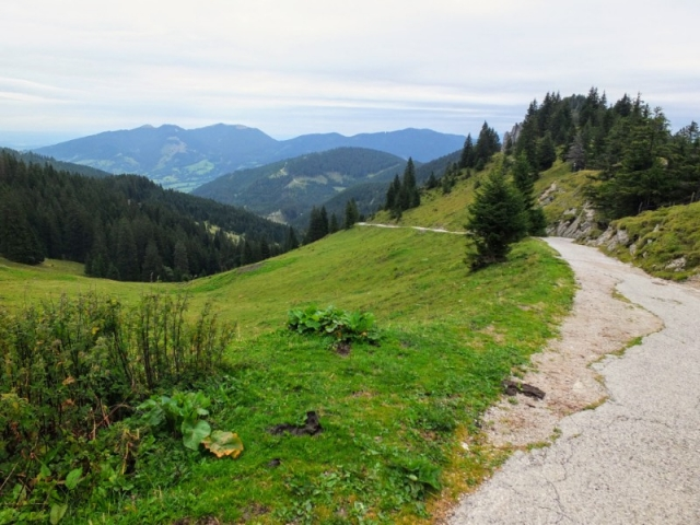meadow trail