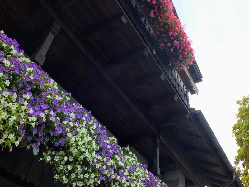unwild flowers