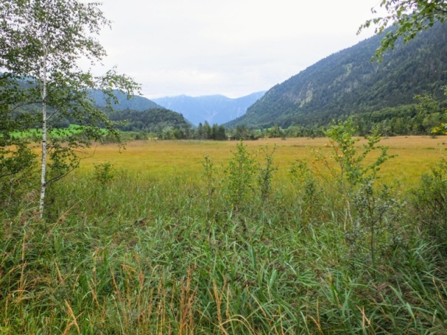 valley meadow