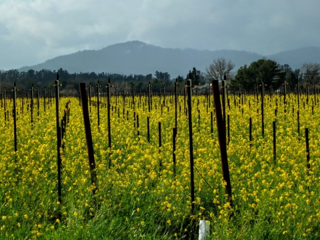 winter flowers in vineyard