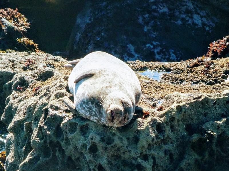 seal slumber