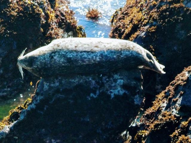 balanced seal