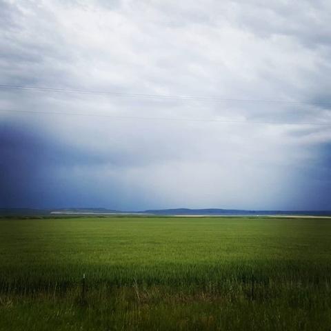 Big Sky Barley Field