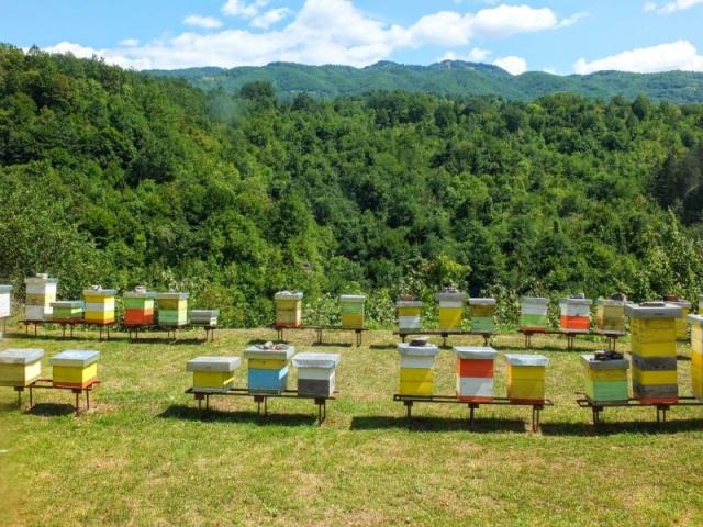 bee colony at Morača Monastery
