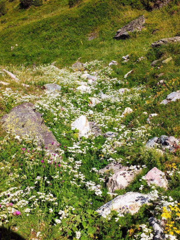 flowery spot
