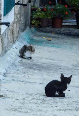 kittens of Kotor